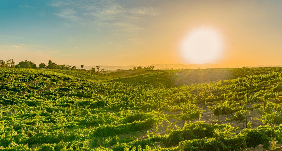 Best weekend trips from San Diego - Temecula